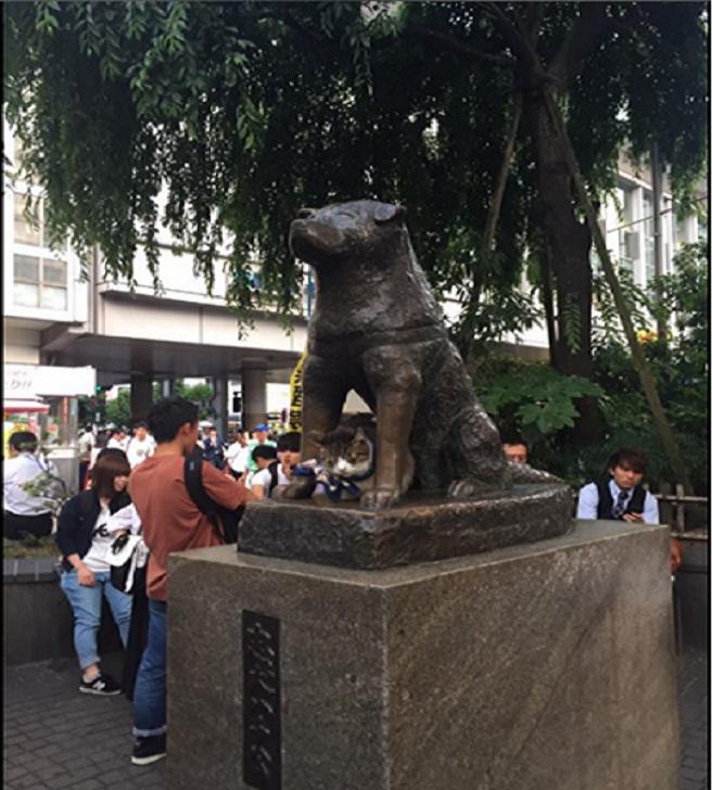 Hachiko Statue with cat in Shibuya Tokyo
