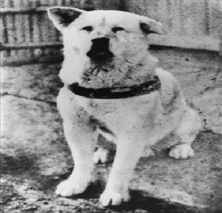 Hachiko picture