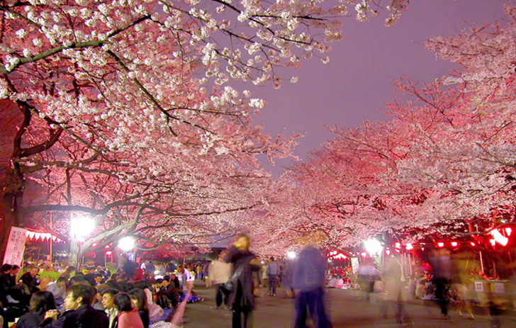 Ueno Park Cherry blossom night