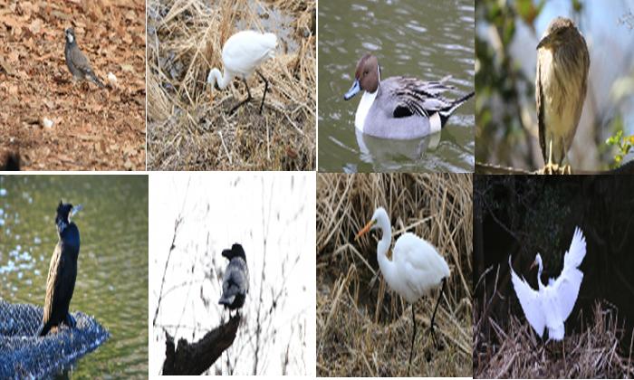 Birds in Shakujii Park Tokyo