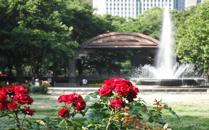 Hibiya Park Fountain with Rose