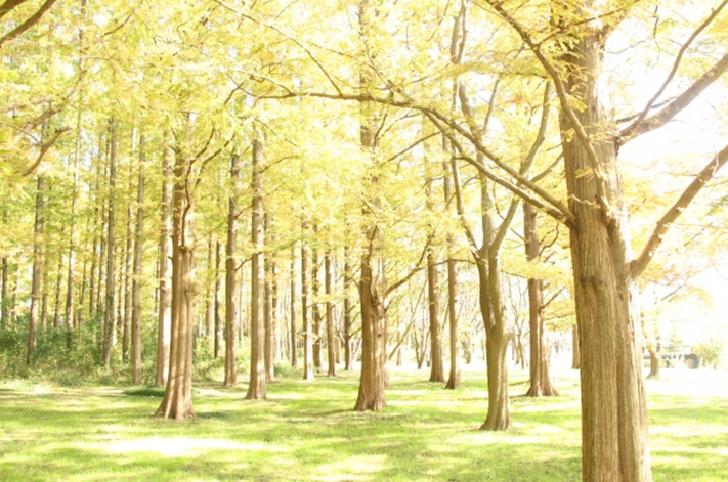 Mizumoto Park Forest of Metasequoia