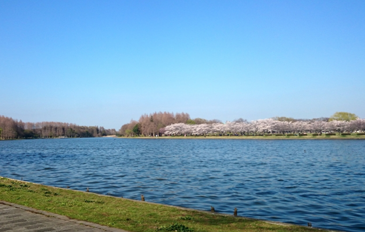 Mizumoto Park Riverside with Cherry trees