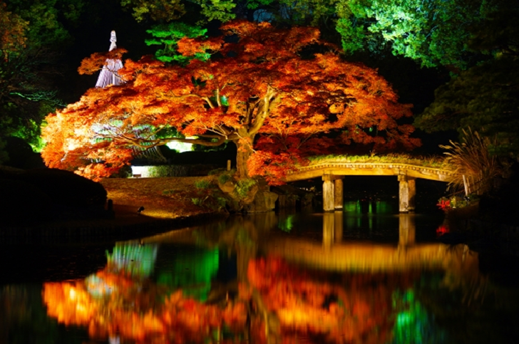 Rikugien garden maple tree at night Tokyo
