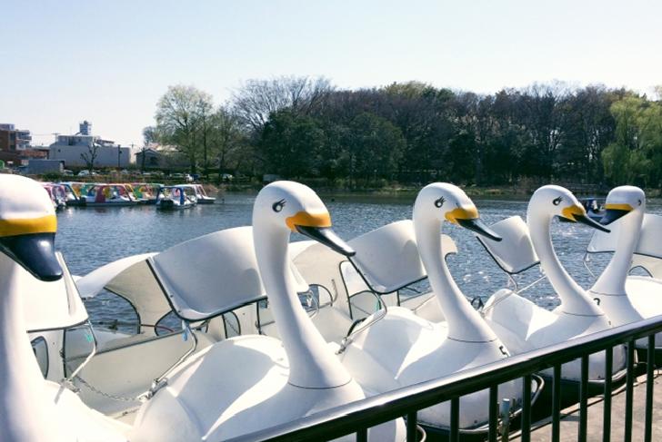 Swan boat in Shakujii Park Tokyo