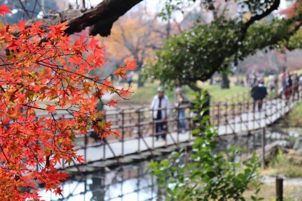 TOKYO Koishikawa Korakuen Gardens Autumn