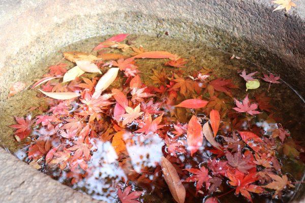 TOKYO Koishikawa Korakuen Gardens Autumn leave