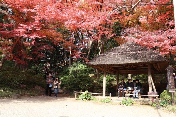 TOKYO Koishikawa Korakuen Gardens Japan