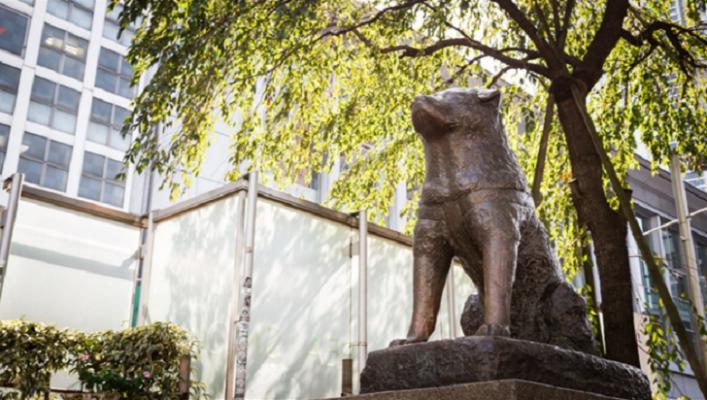 Hachiko Statue waiting in Shibuya Tokyo Japan