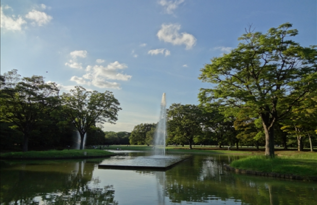 Yoyogi park in Tokyo Japan