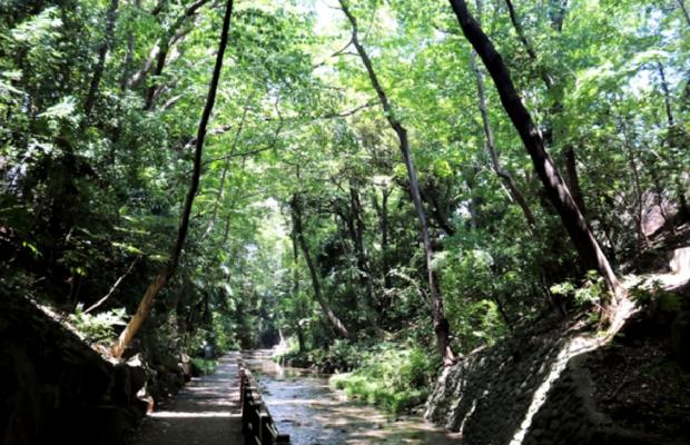 TOKYO Todoroki Ravine (Todoroki Valley) in Japan