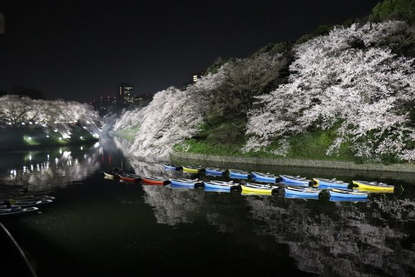 Tokyo Cherry blossoms viewing top 5 spots
